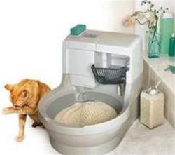 Educare Il Gatto Alla Lettiera