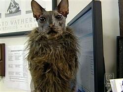 Usa Ecco Il Gatto Brutto La Star Di Uno Studio Veterinario Americano