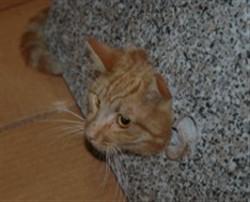 Pulizia della lettiera per gatti la mano è la pulizia della