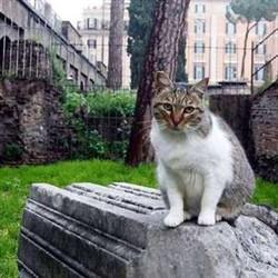 Roma chiusura del gattile di porta portese - Porta portese offerte lavoro roma ...