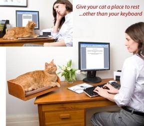 Il gatto adora la tastiera del vostro pc per il riposino - Tastiera del letto ...